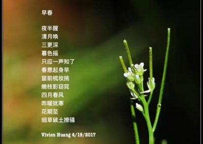 Poem by Vivien Huang