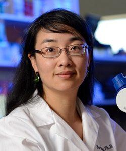 Guo-Li Ming, M.D., Ph.D.